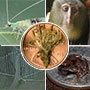 Top 5: Species Found Last Year